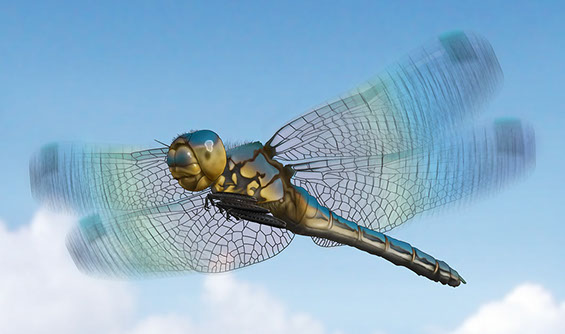 Natural history illustration of a dragonfly in flight.