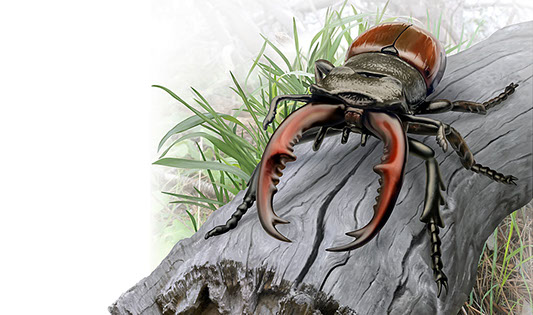 Natural history illustration of a stag beetle on a weathered log.